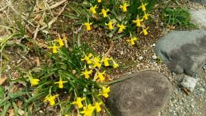 garden_flower