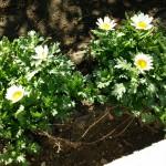 parking_flower