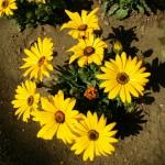yellow_floewer